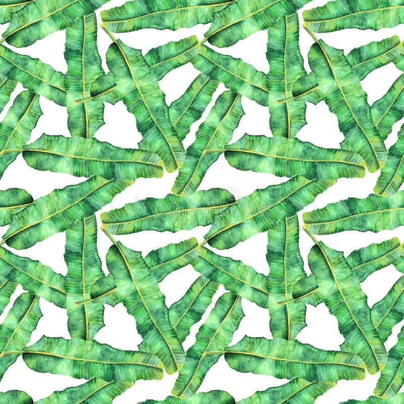 Modello senza cuciture della banana intrecciata dell'acquerello delle foglie di palma illustrazione vettoriale