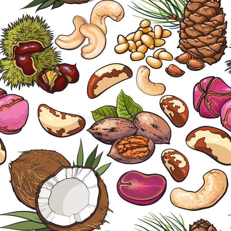 Modello senza cuciture della noce, noce di cocco, anacardio, cola, pino, noci del Brasile illustrazione vettoriale