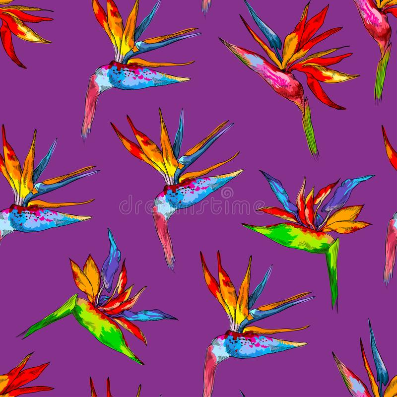 Modello senza cuciture della raccolta variopinta di strelizia Vector i fiori esotici di un uccello di paradiso isolato sulla viol royalty illustrazione gratis