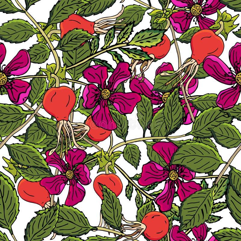 Modello senza cuciture delle bacche della rosa canina Frutti rosa selvaggi del fondo di vettore con la foglia verde per lo scirop illustrazione vettoriale