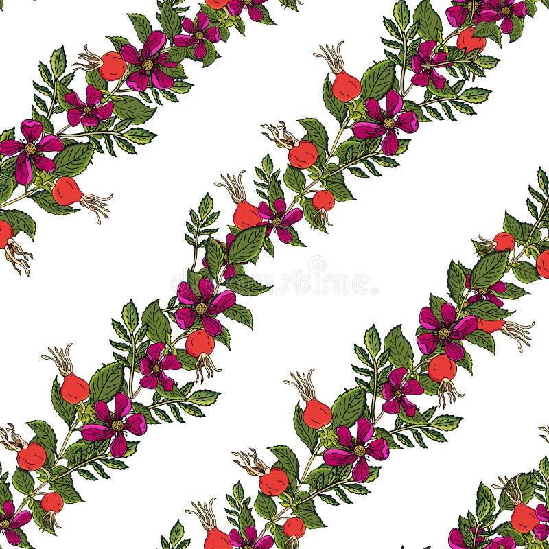 Modello senza cuciture delle bacche della rosa canina Frutti rosa selvaggi del fondo di vettore con la foglia verde per lo scirop royalty illustrazione gratis