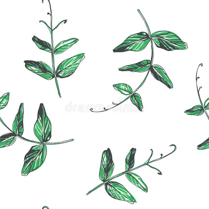 Modello senza cuciture di vettore con le foglie dei piselli isolate su bianco Modello botanico di colore disegnato a mano con fog illustrazione vettoriale