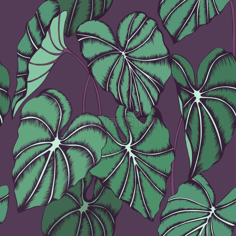Modello senza cuciture di vettore con le foglie della pianta delle orecchie di elefante illustrazione di stock