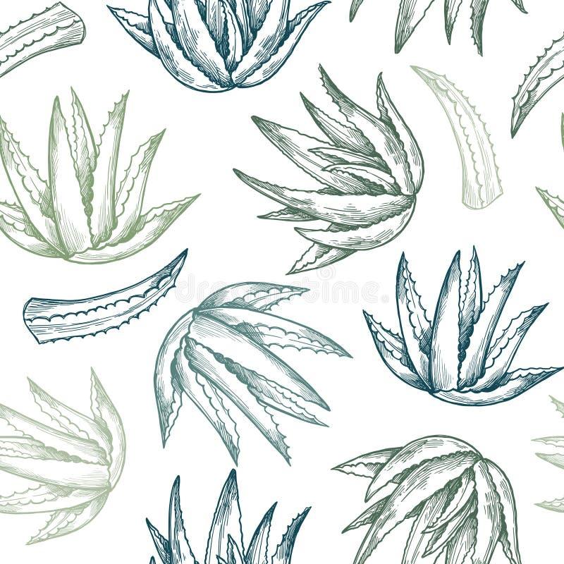 Modello senza cuciture di vettore disegnato a mano Aloe vera Priorità bassa di erbe illustrazione vettoriale