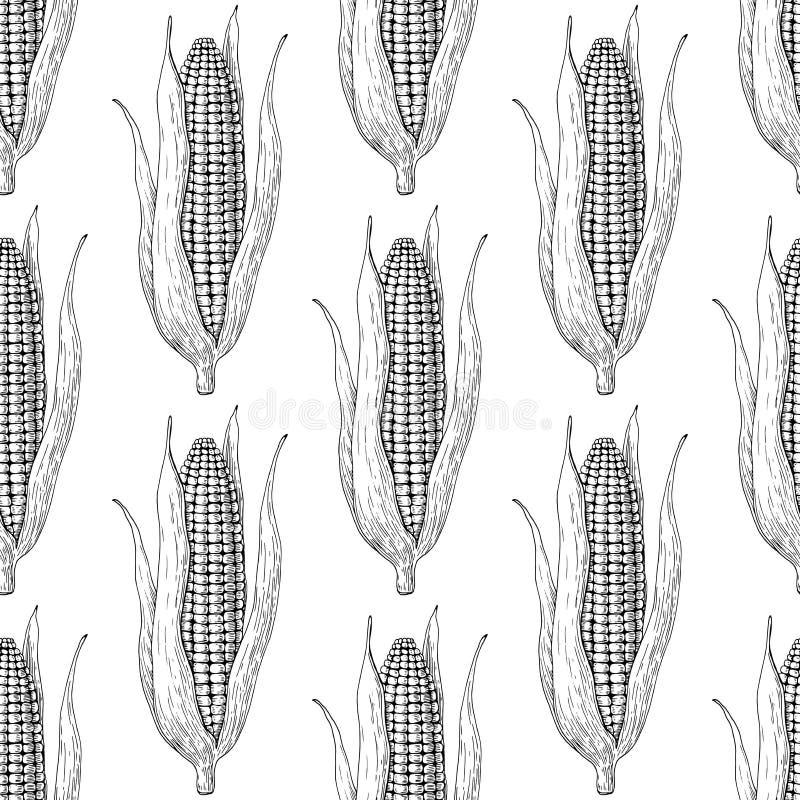 Modello senza cuciture di vettore disegnato a mano della pannocchia di granturco Carta da parati isolata di stile incisa verdura royalty illustrazione gratis
