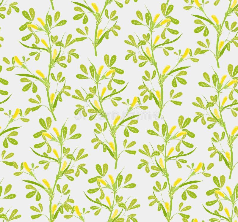 Modello senza cuciture floreale con le piante di fioritura del fieno greco su fondo bianco Crescita di fiori abbastanza gialla su illustrazione vettoriale