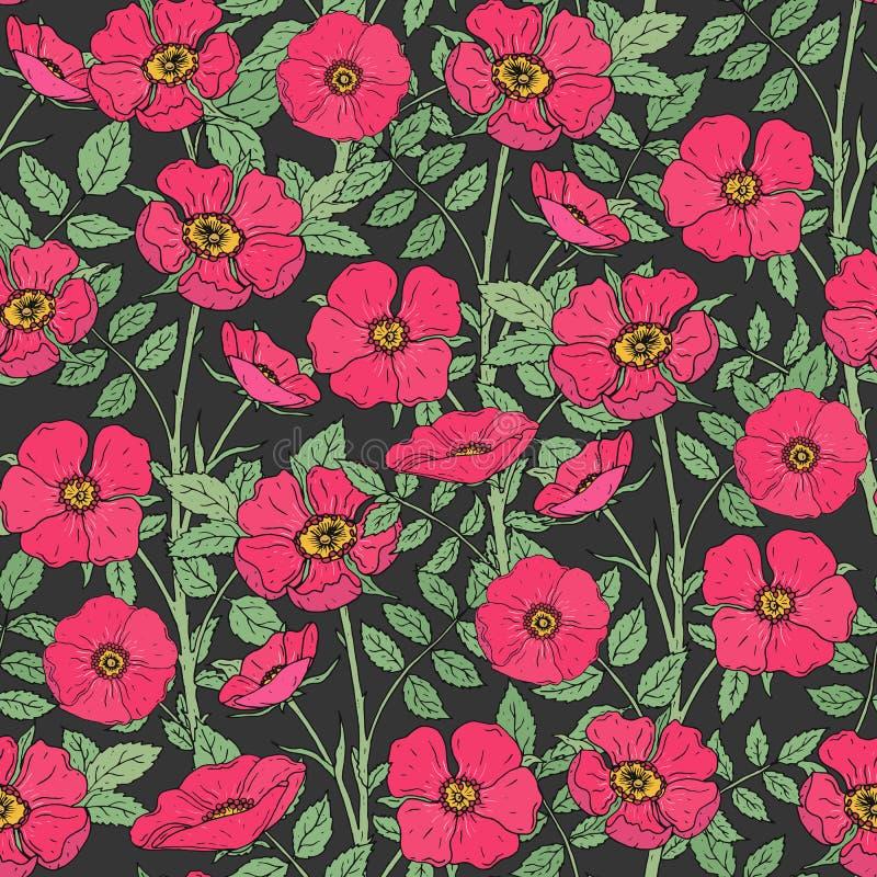 Modello senza cuciture floreale con le rose canine di fioritura, i gambi verdi e le foglie su fondo scuro Mano rosa elegante dei  illustrazione di stock