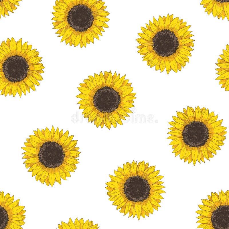 Modello senza cuciture floreale con le teste del girasole Contesto botanico con il fiore di fioritura o il raccolto coltivato dis royalty illustrazione gratis