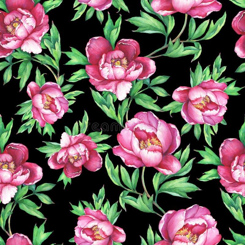 Modello senza cuciture floreale d'annata con la fioritura delle peonie rosa, su fondo nero Illust disegnato a mano della pittura  royalty illustrazione gratis