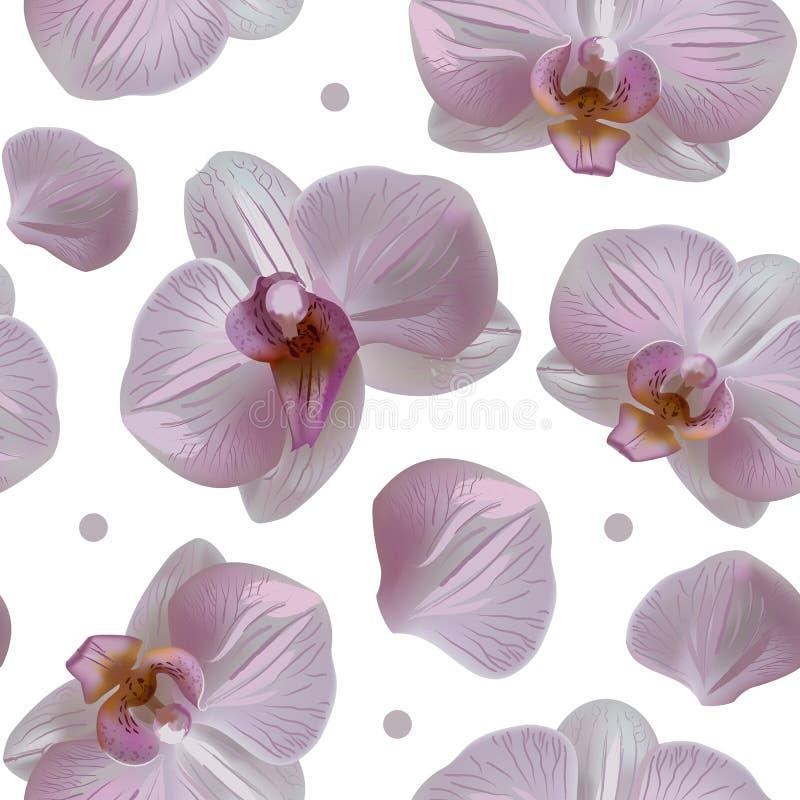 Modello senza cuciture floreale dell'orchidea tenera con le fioriture, i petali ed i punti isolati su bianco illustrazione vettoriale