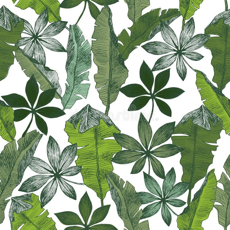 Modello senza cuciture floreale della giungla delle piante tropicali Il fondo di vettore della stampa della banana della palma de illustrazione vettoriale