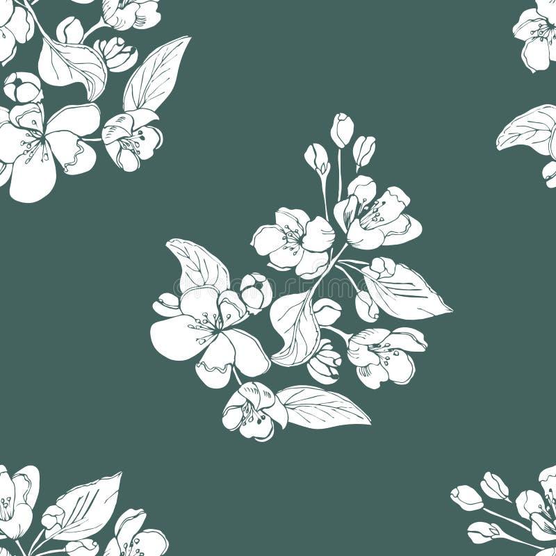 Modello senza cuciture floreale di brunch sbocciante bianco dei fiori di melo su fondo verde scuro Abbozzo disegnato a mano royalty illustrazione gratis