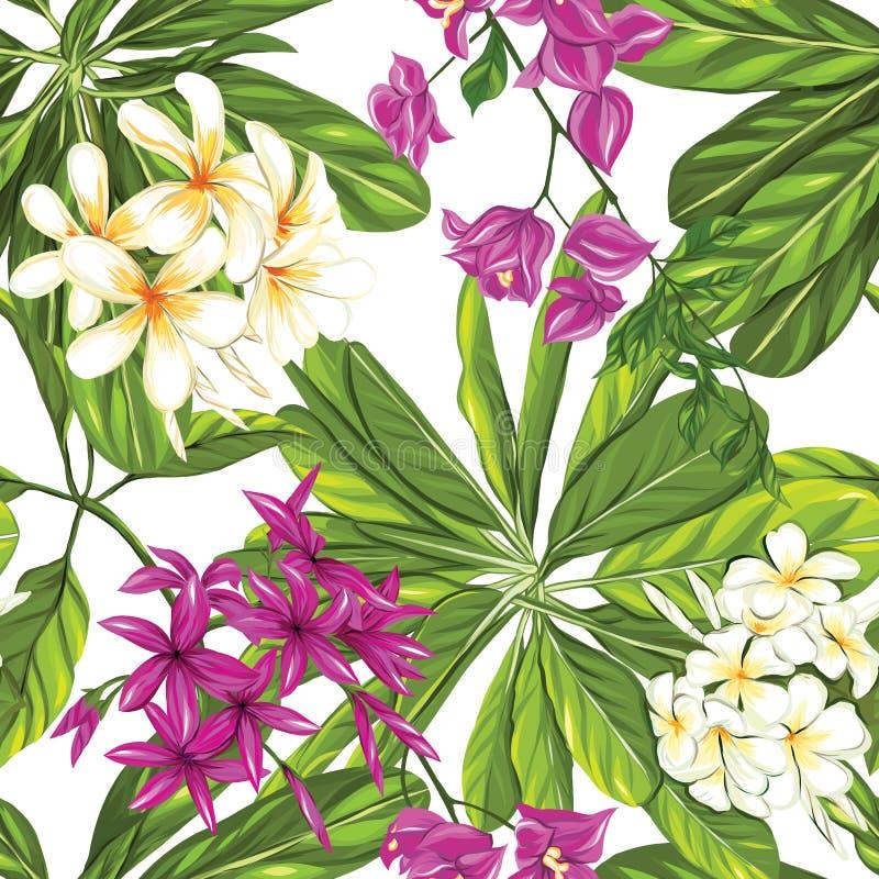 Modello senza cuciture, fondo con le piante tropicali: monstera, strelizia, buganvillea, illustrazione vettoriale