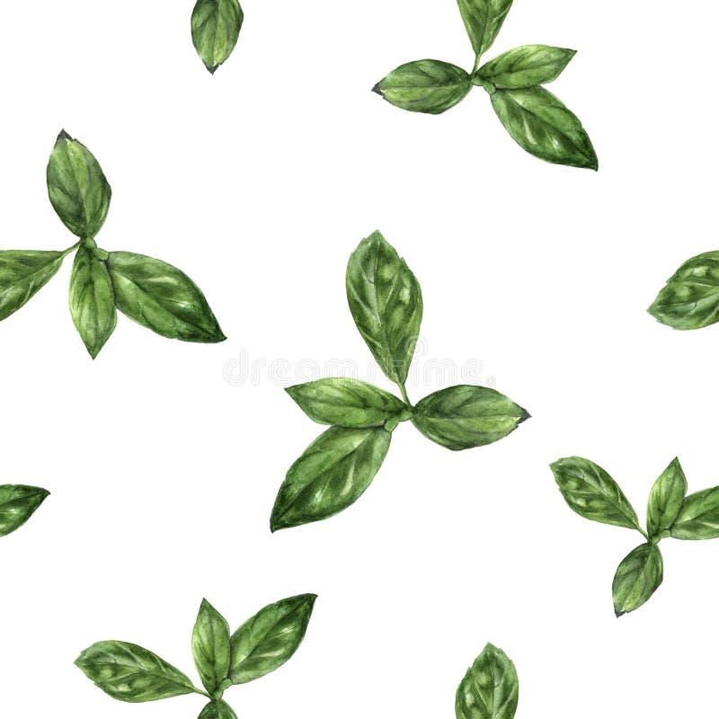 Modello senza cuciture isolato erba disegnata a mano del basilico dell'acquerello illustrazione di stock