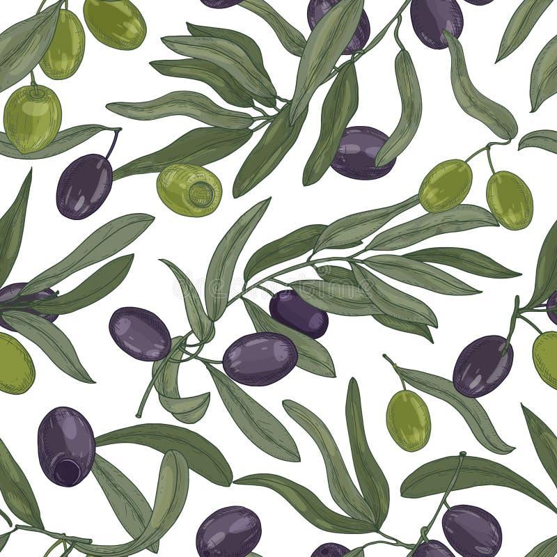 Modello senza cuciture naturale con i rami di olivo, foglie, frutti maturi neri e verdi o drupe su fondo bianco illustrazione vettoriale