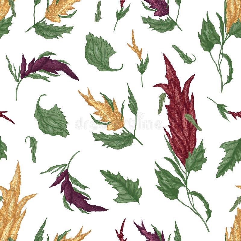 Modello senza cuciture naturale con la quinoa o la pianta di fioritura dell'amaranto su fondo bianco Contesto con grano coltivato illustrazione di stock