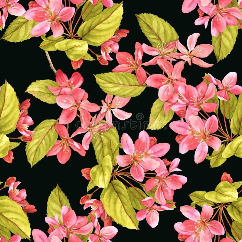 Modello senza cuciture scuro dell'acquerello rosa del fiore della ciliegia royalty illustrazione gratis