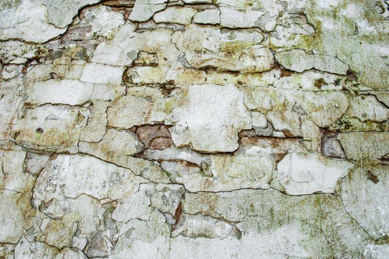 Modello trasversale segato di struttura della parete delle mattonelle strutturate di pietra Fondo di pietra delle mattonelle dell immagini stock