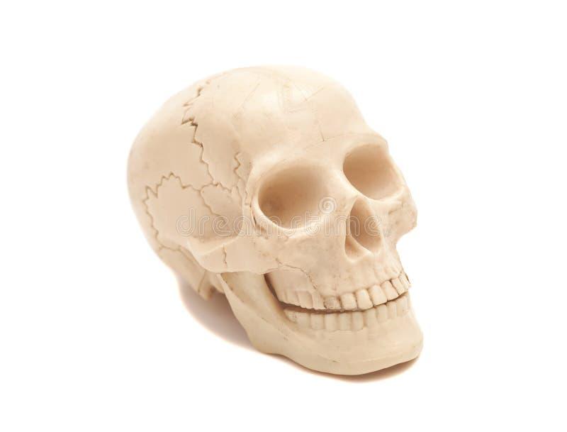 Modello umano del cranio fotografie stock libere da diritti