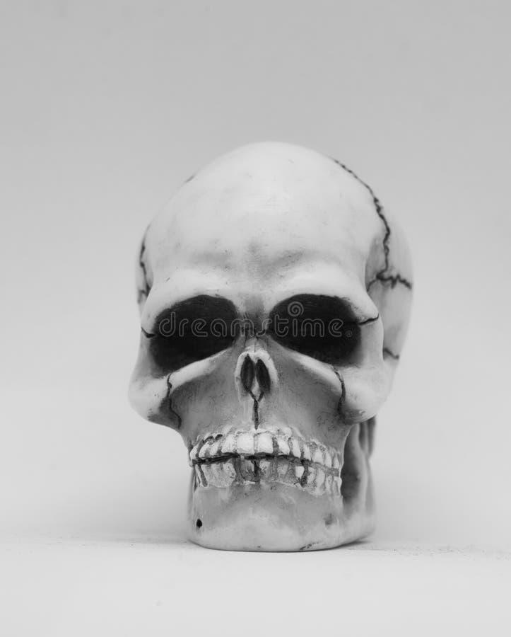 Modello umano del cranio immagine stock