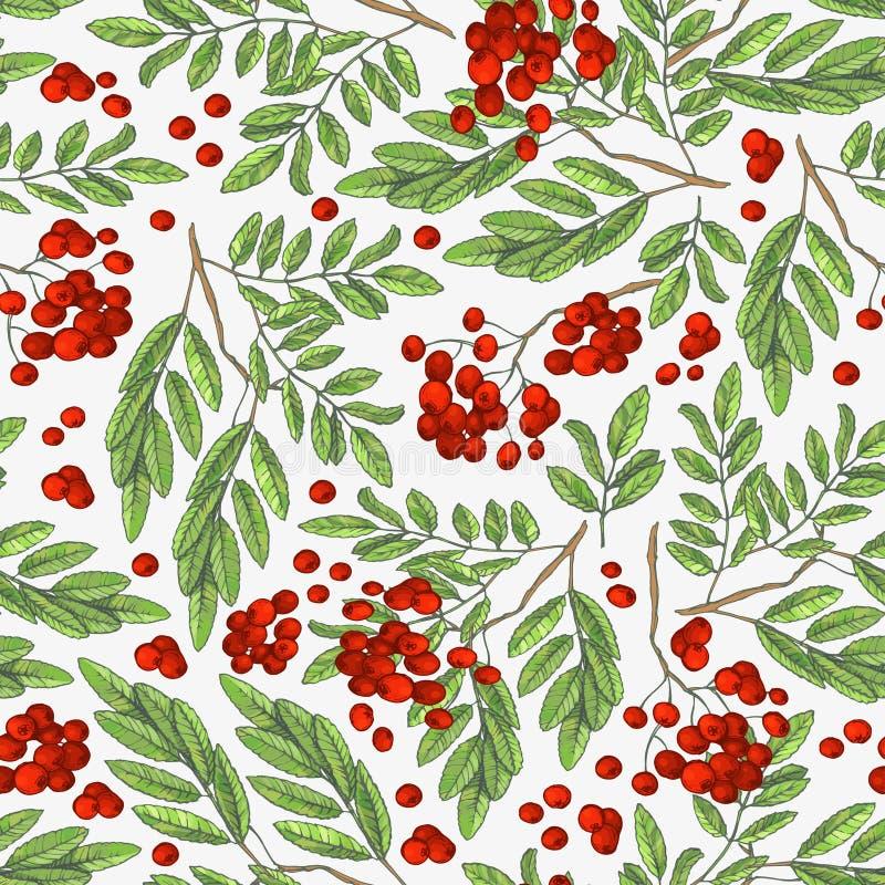 Modello variopinto senza cuciture di autunno con le bacche di sorbo e le foglie verdi su un fondo bianco Illustrazione floreale d illustrazione vettoriale