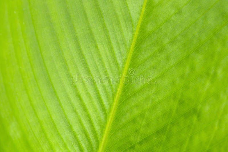Modello verde della foglia, fondo astratto della natura Primo piano fotografia stock libera da diritti
