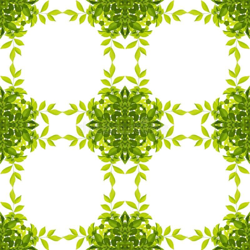 Modello verde della foglia su bianco illustrazione di stock