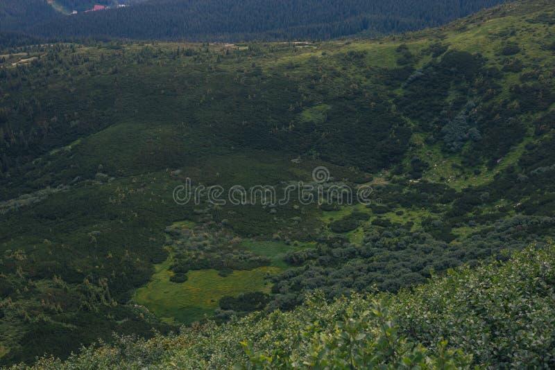 Modello verde della natura in montagne fotografia stock libera da diritti