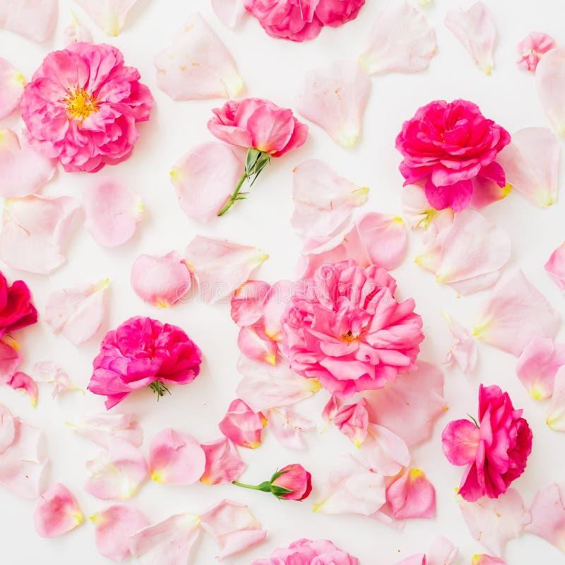 Modellsammansättning av rosa färgrosen blommar på vit bakgrund Lekmanna- lägenhet, bästa sikt Blommor texturerar royaltyfri foto