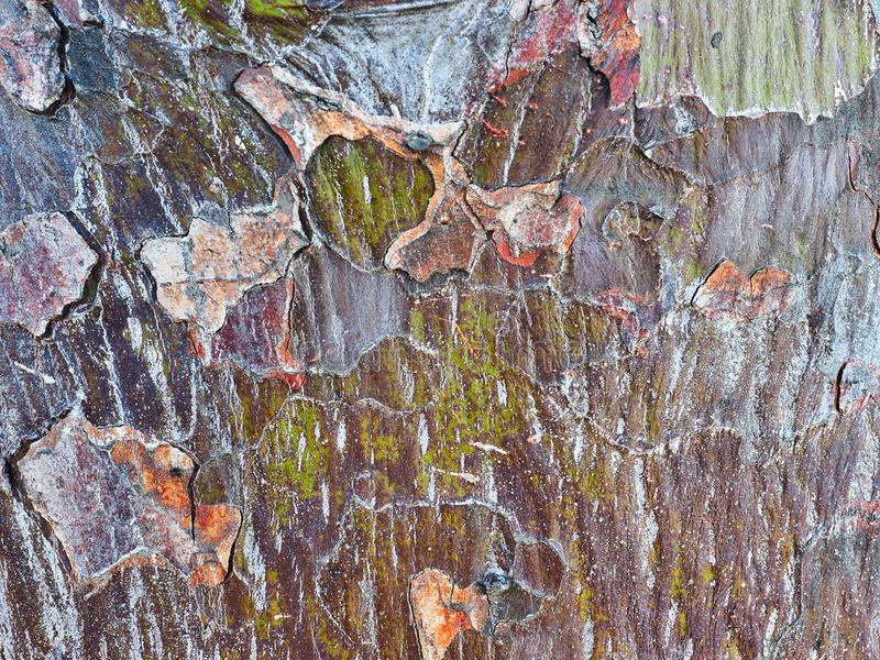Modelo abstracto de la corteza, árbol nativo australiano fotografía de archivo