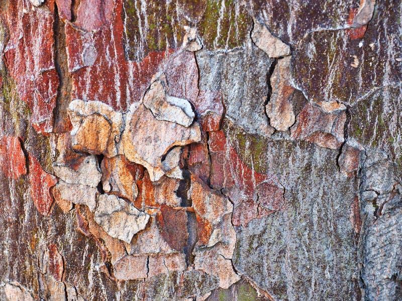 Modelo abstracto de la corteza, árbol nativo australiano fotografía de archivo libre de regalías
