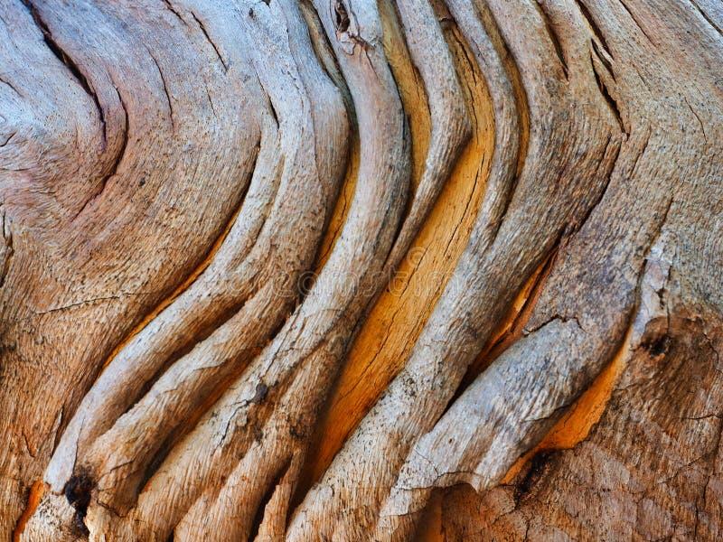 Modelo abstracto de la corteza, árbol nativo australiano imagenes de archivo