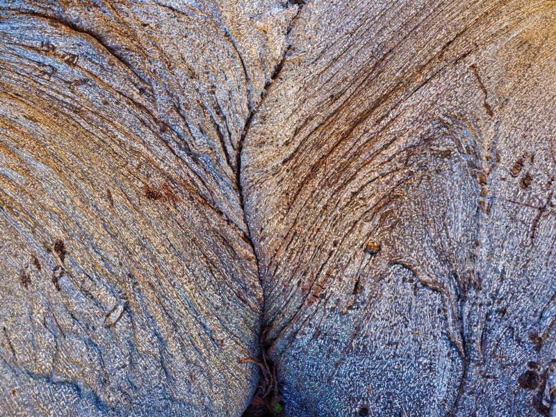 Modelo abstracto de la corteza, árbol nativo australiano imagen de archivo