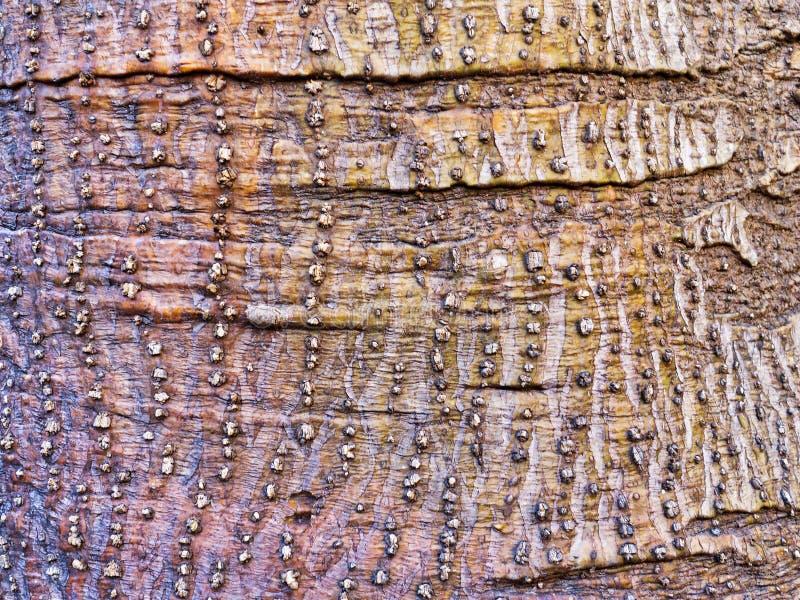 Modelo abstracto texturizado lleno de protuberancias áspero de la corteza foto de archivo
