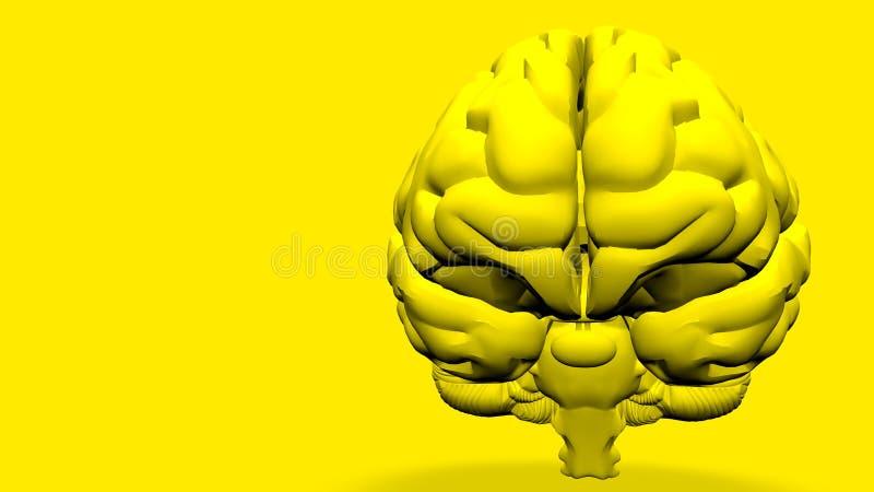 Modelo anatómico 3D del cerebro humano para los estudiantes de medicina stock de ilustración