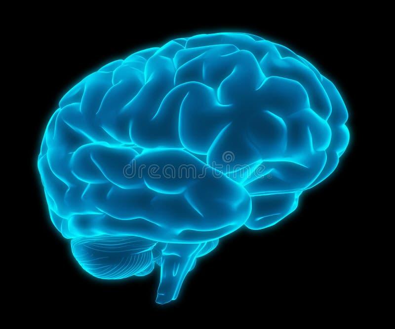 Modelo azul del cerebro humano 3d stock de ilustración