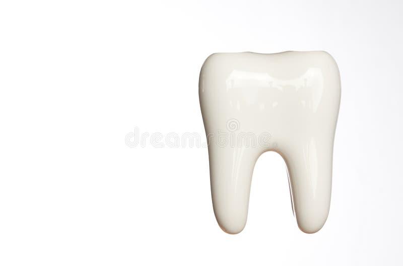 Modelo blanco del diente del esmalte aislado en blanco imágenes de archivo libres de regalías