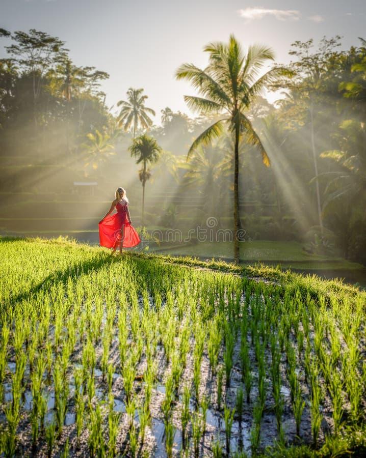 Modelo bonito no vestido vermelho no terraço 2 do arroz de Tegalalang foto de stock