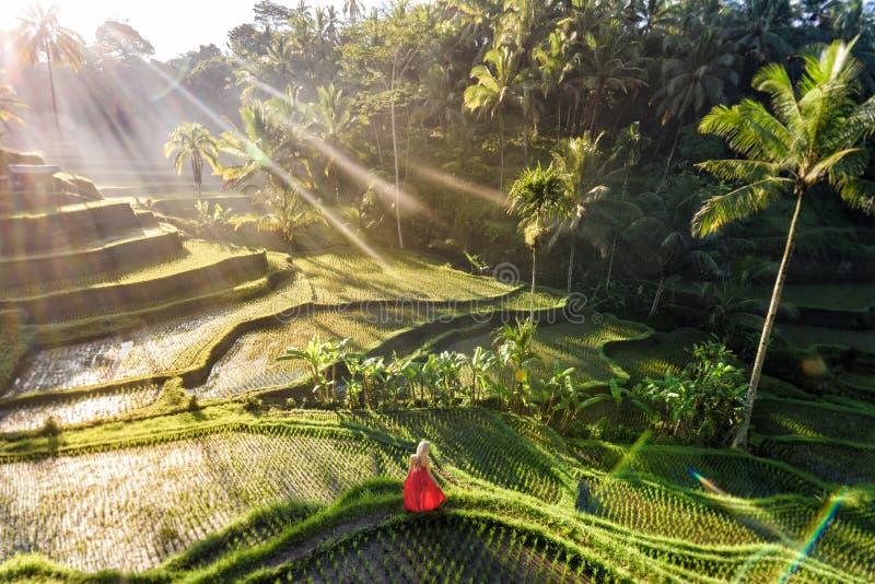 Modelo bonito no vestido vermelho no terraço 3 do arroz de Tegalalang fotografia de stock royalty free