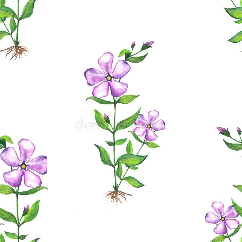 Modelo bot?nico floral incons?til Ejemplo de la acuarela de las flores del bígaro stock de ilustración