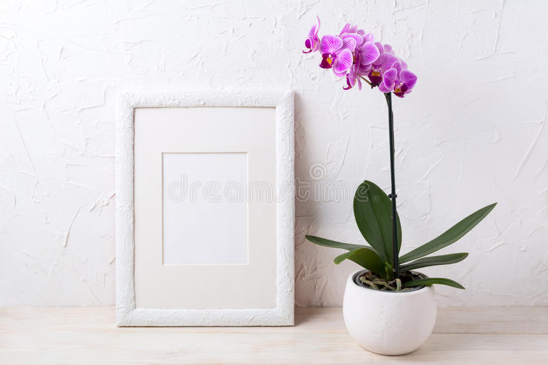 Modelo branco do quadro com a orquídea roxa no potenciômetro de flor fotografia de stock royalty free