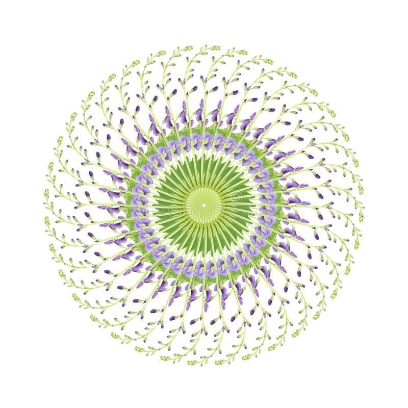 Modelo circular de las flores del baptisia fotografía de archivo