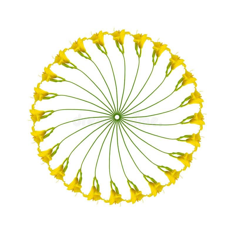 Modelo circular de las flores del Hemerocallis foto de archivo