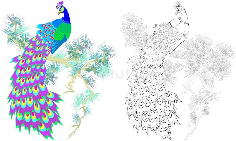 Modelo Colorido Y Blanco Y Negro Para Colorear Ejemplo Del Pavo Real ...