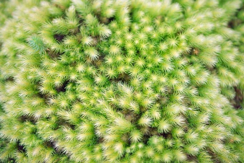 Modelo complejo del musgo verde suave fotos de archivo
