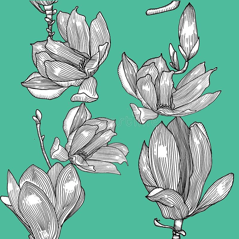 Modelo con la magnolia floreciente Mano drenada ilustración del vector