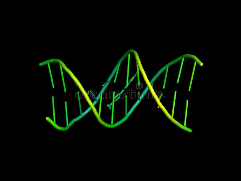 modelo 3D de la DNA ilustración del vector