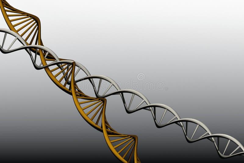 Modelo 3 D do ADN torcido. imagens de stock