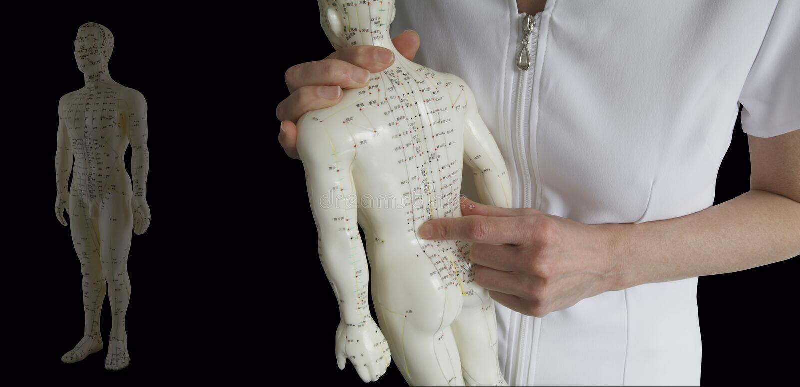 Modelo da acupuntura - treinamento tradicional da medicina chinesa imagens de stock royalty free