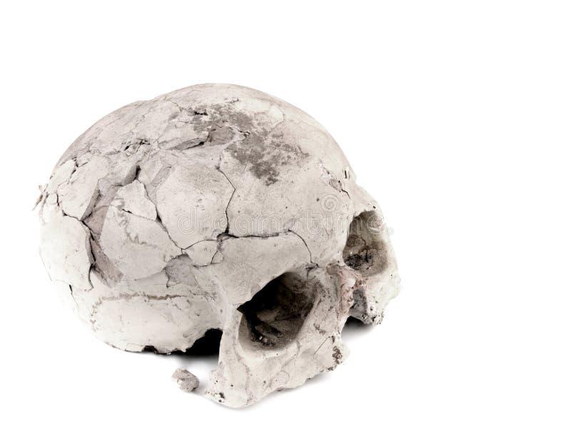 Modelo da gipsita do crânio humano imagens de stock